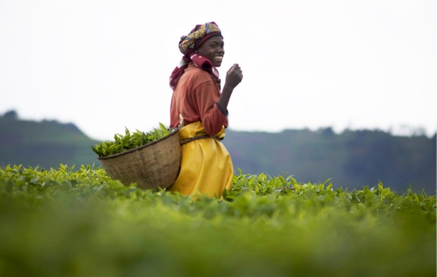panafrican beauty rwanda mountain tea