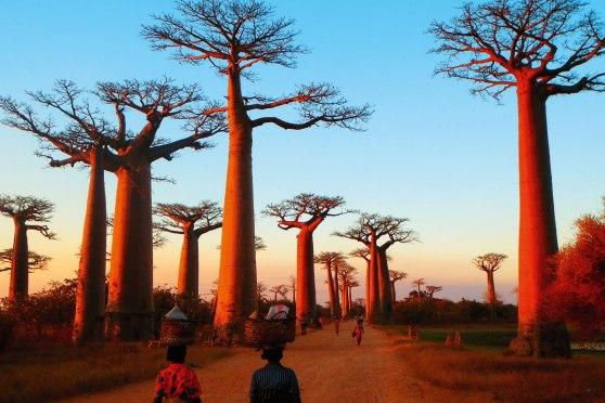 baobab huile bouye